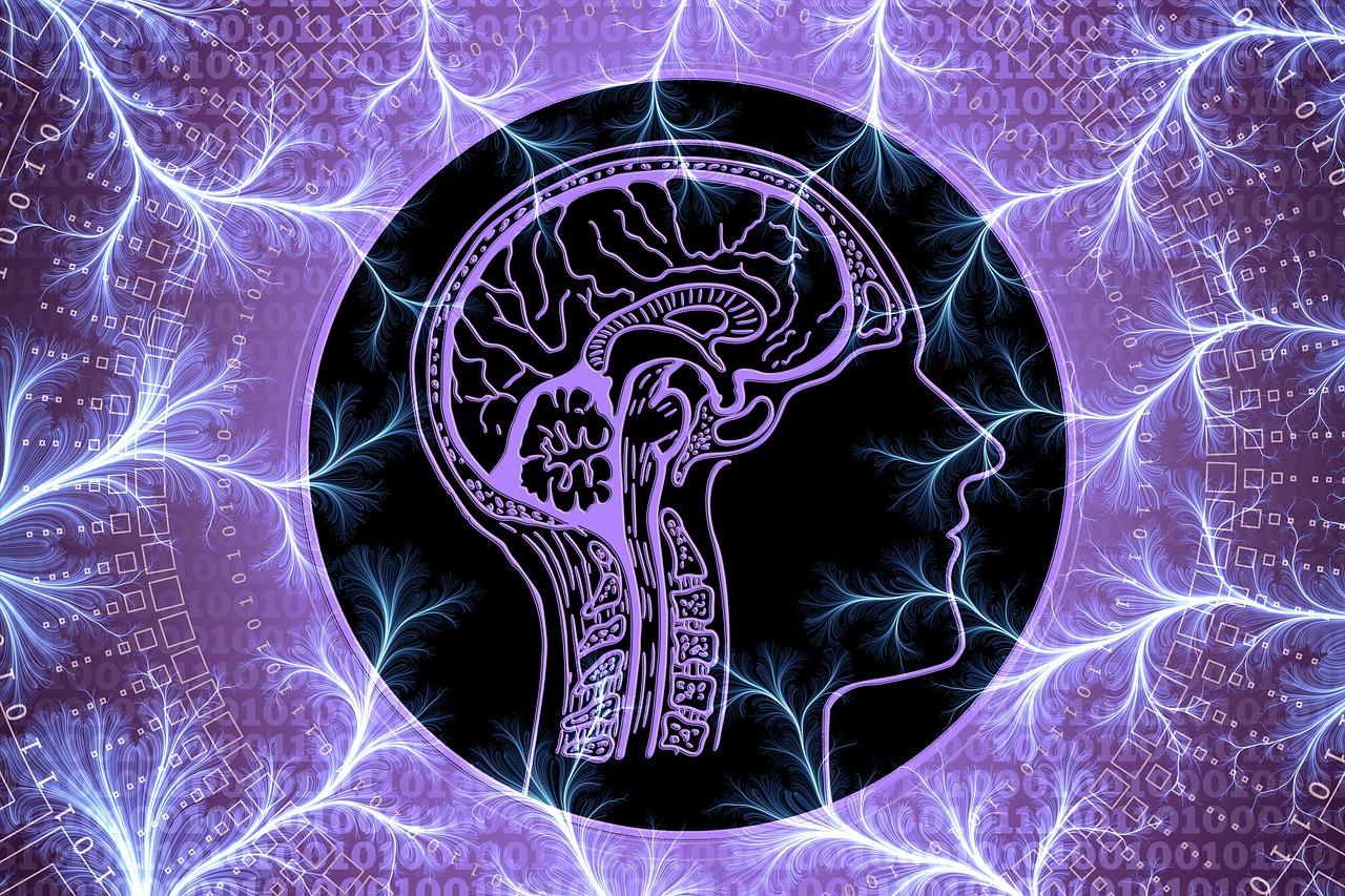 neuroplasticidad-organizacional-1